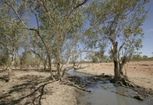 Yurrkuru Soakage, NT. Photo: George Serras.